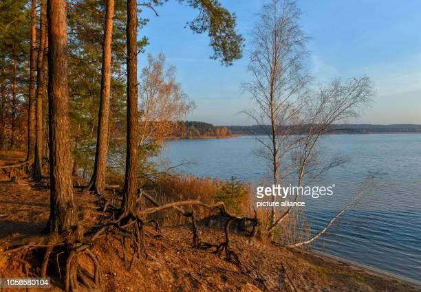 06 November 2018 Brandenburg Frankfurt Sunrise over Lake Helene Lake Helene one of the most popular bathing lakes in Brandenburg was created from an...