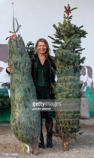 28 November 2019 Bavaria Markt Indersdorf The inventor Birgit Weiß presents during the symbolic opening of the Christmas tree season firs packed with...