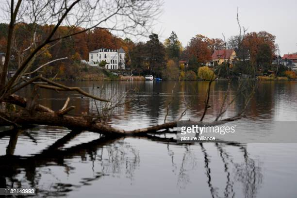 Bare branches of a tree on the shore of Grünheider Peetzsee are reflected in the water According to government sources the planned factory of the...