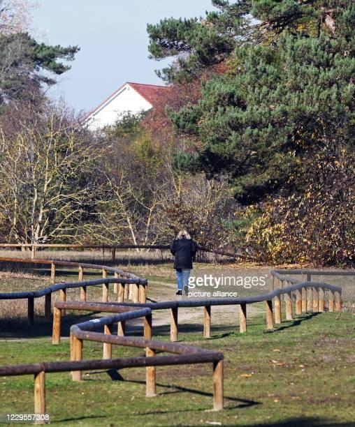 "November 2020, Baden-Wuerttemberg, Karlsruhe: One person walks through the natural monument ""Sandgrube Grüner Weg"". Currently, more than 14 000..."
