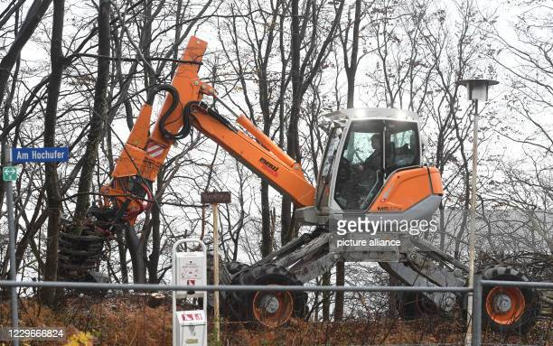 November 2020, Mecklenburg-Western Pomerania, Sellin: Employees of a specialist company cut down trees on the steep slope in Sellin. Near the pier a...