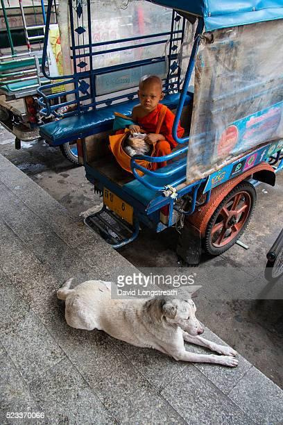 A novice Buddhist monk pauses to be photographed as he makes his morning rounds Buddhism is the predominant religion in Thailand