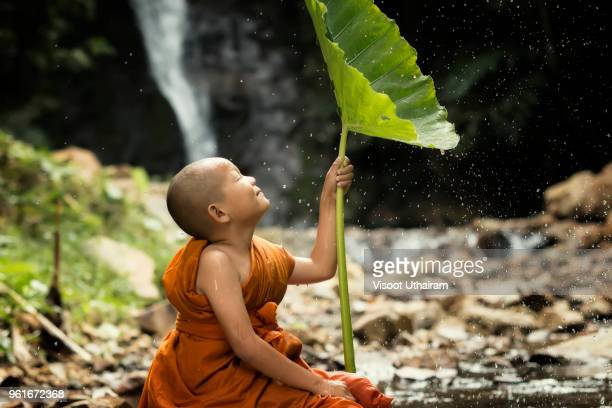 novice is in a fresh nature. - 仏陀 ストックフォトと画像