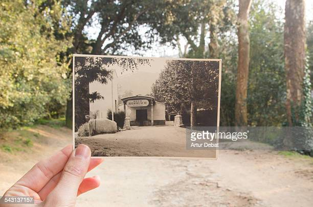 now and then, holding picture by hand on nature. - history stock pictures, royalty-free photos & images
