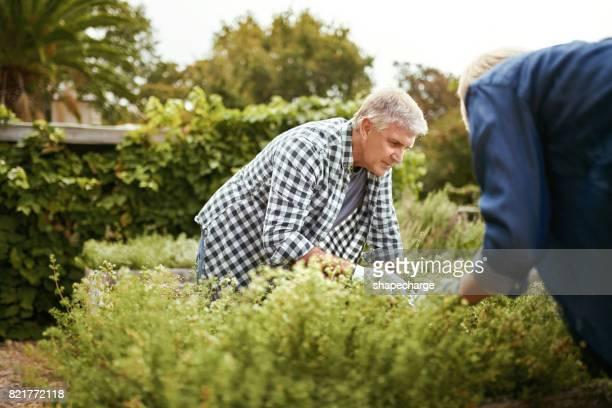 Nu is het tijd om te verkennen van de gebieden van het tuinieren
