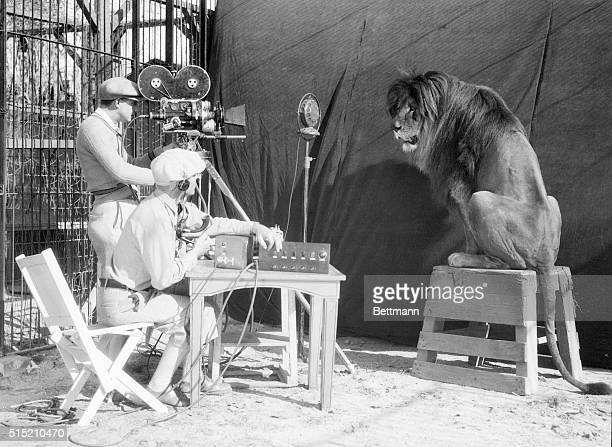 1/28/29 Now that the talkies are making all the human stores sound their vowels and constants properly Leo the MGM Lion has decided that he had...