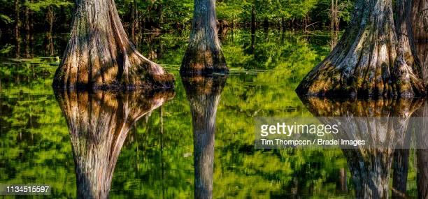 noxubee wildlife refuge in starkville - ミシシッピ州 ストックフォトと画像