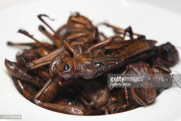 Nsenene or grasshoppers a popular bar snack in Uganda is presented in the Disgusting Food Museum on December 6 2018 in Los Angeles California Care...