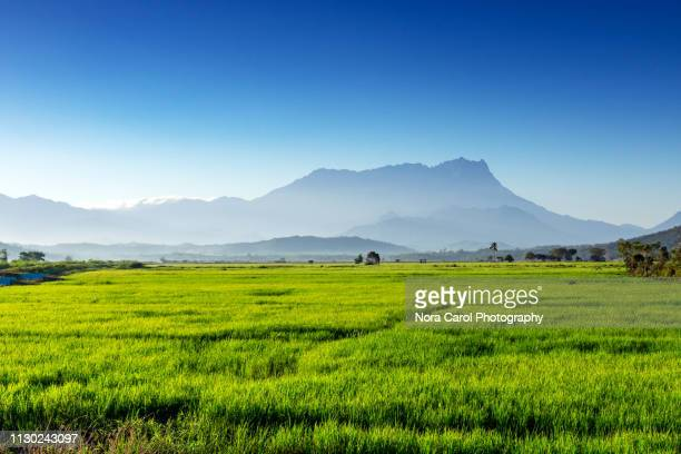 nt kinabalu and paddy field in kota belud - kota kinabalu stock pictures, royalty-free photos & images