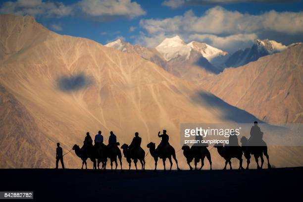 Nubra valley and camel riding
