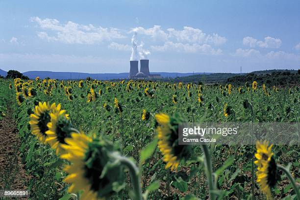 Nuclear plant of Trillo Guadalajara Behind a field of sunflowers the nuclear plant in operation
