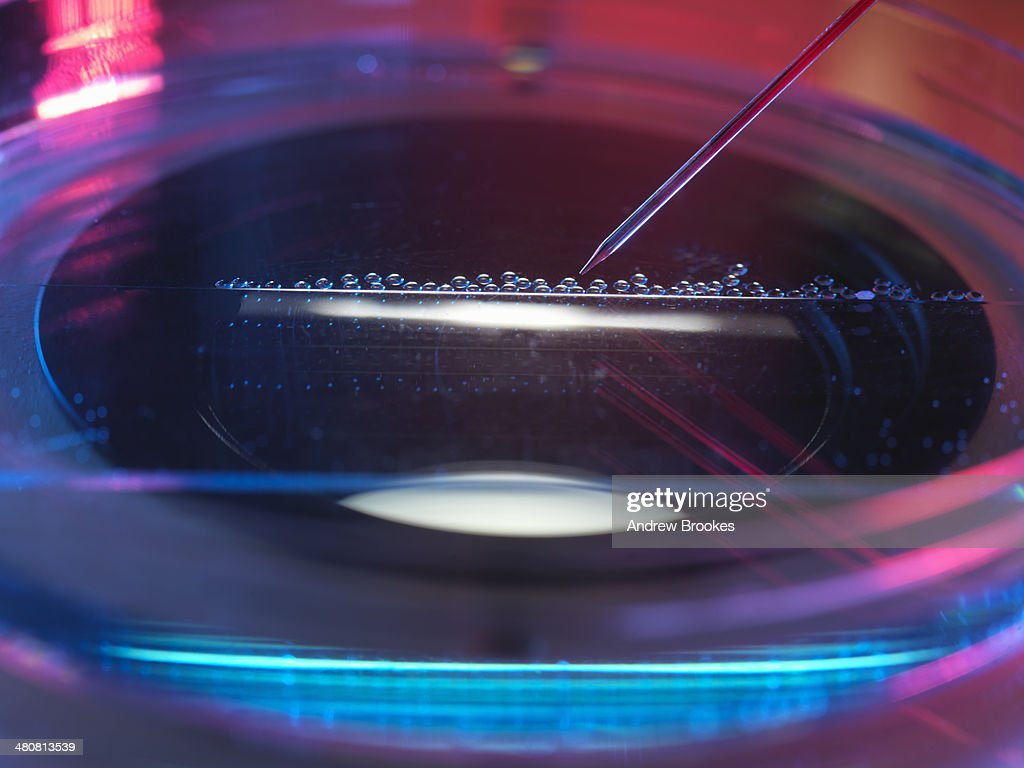 Nuclear transfer, Stem cells made from the cell nucleus : Stock Photo