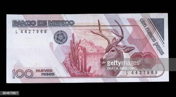 100 nuevos pesos banknote reverse Pronghorn Mexico 20th century