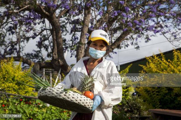 Nui Mizel owner of Maui Nui Farms Farmers Market carries produce for a photograph at her farm in Kula Hawaii US on Saturday April 25 2020 Tourism...