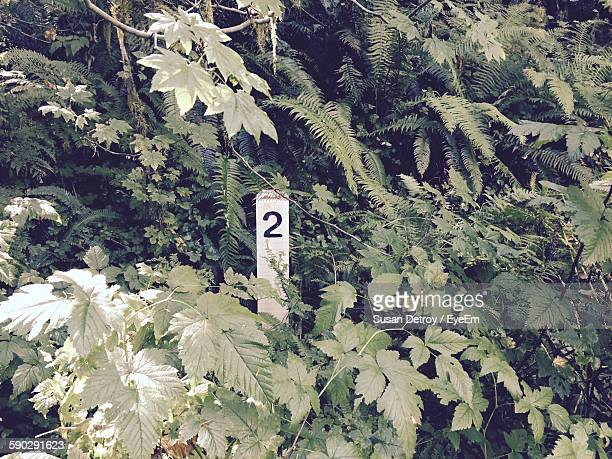 Number 2 On Wooden Pole Amidst Plants In Forest