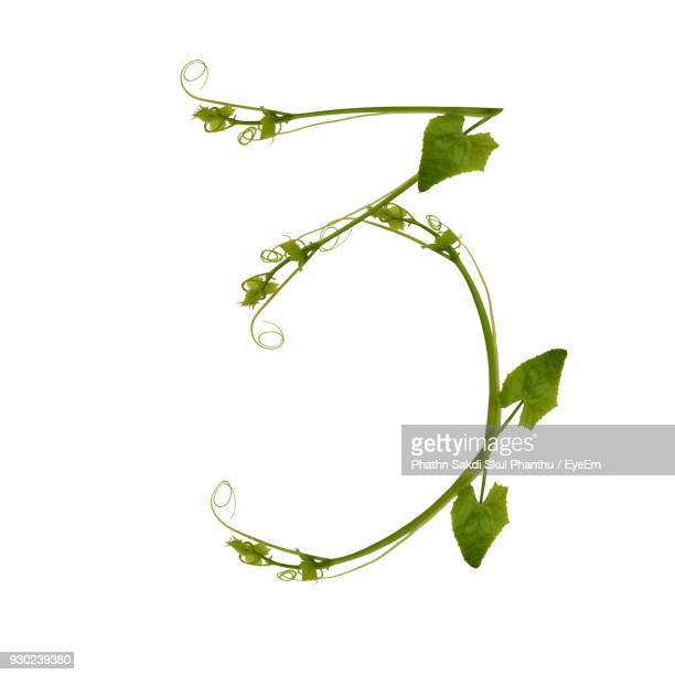 Number Made With Plant Against White Background