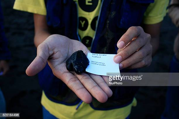 A number of baby sea turtles released into the wild on July 19 2014 at Samas Beach Bantul Yogyakarta Indonesia This event is a program of cooperation...