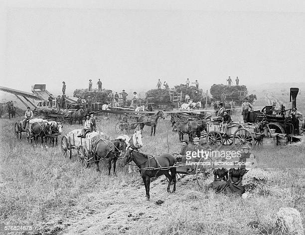 A number of horsedrawn threshing machines and one steampowered machine on the James J Hill Farm | Location Northcote Minnesota USA