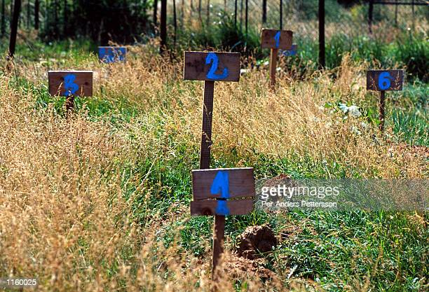 Numerical wooden plaques mark fresh graves June 18 1999 in a grave yard in Suva Reka Kosovo Victims here were allegedly killed by Serbs paramilitary...