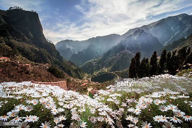 nuns valley, curral das freiras, madeira, portugal - madeira stock photos and pictures