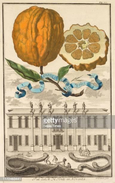 Nurnbergische Hesperides: No. 185 - Aranzo Striato dolce. Palazzo del N. H. Fonte in Noventa, c. 1708. Joseph de Montalegre , Johoann Christoph...