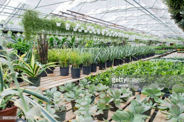 60 Top Plant Nursery Pictures, Photos and Images - Getty Images