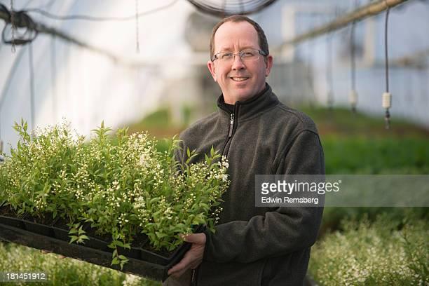 nurseryman - ornamental plant stock pictures, royalty-free photos & images