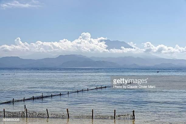 Nusa Lembogan Seaweed culture