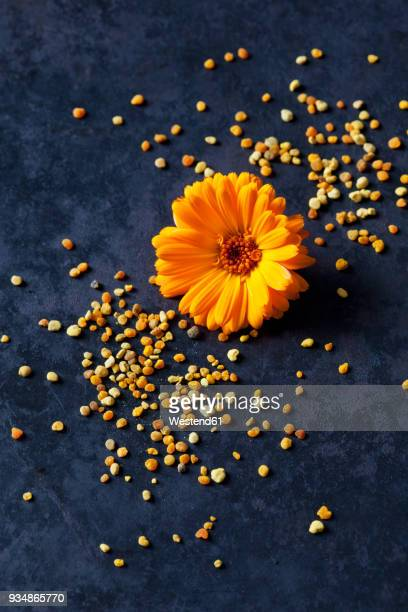 nutritional supplement - pot marigold stock pictures, royalty-free photos & images