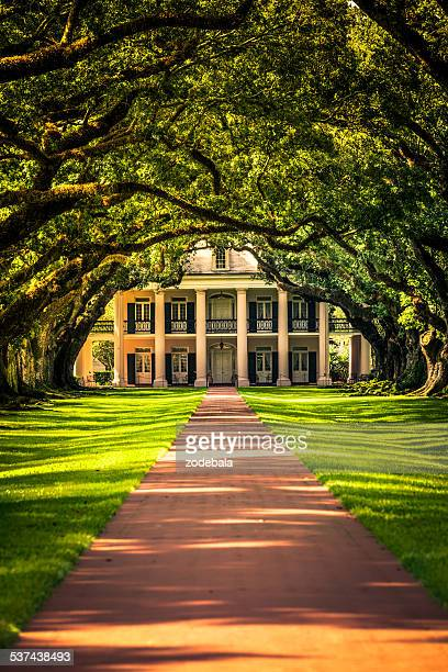 oak alley plantation house in louisiana, usa - live oak tree stock pictures, royalty-free photos & images