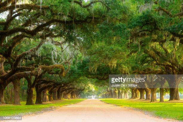 oak avenue, charleston, south carolina, usa - template_talk:south_carolina stock pictures, royalty-free photos & images