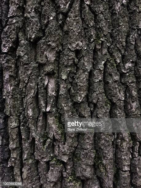 oak bark. - oak wood material stock photos and pictures