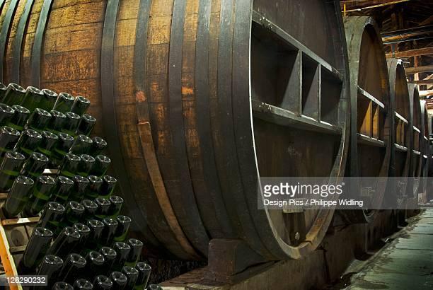 oak barrels in a winery