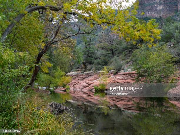 oak creek canyon autumn - oak creek canyon - fotografias e filmes do acervo