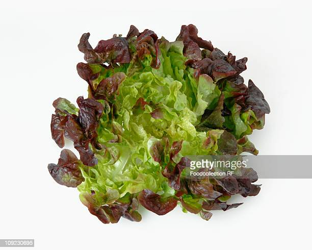 oak leaf lettuce on white background, close-up - leaf lettuce stock pictures, royalty-free photos & images