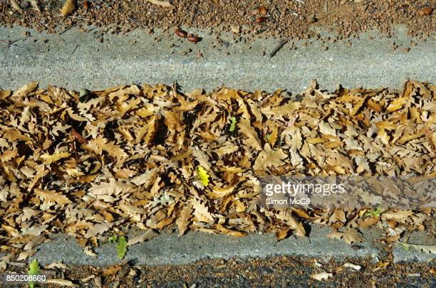 oak leaves and acorns in a road gutter in canberra, australian capital territory, australia - curb stock pictures, royalty-free photos & images