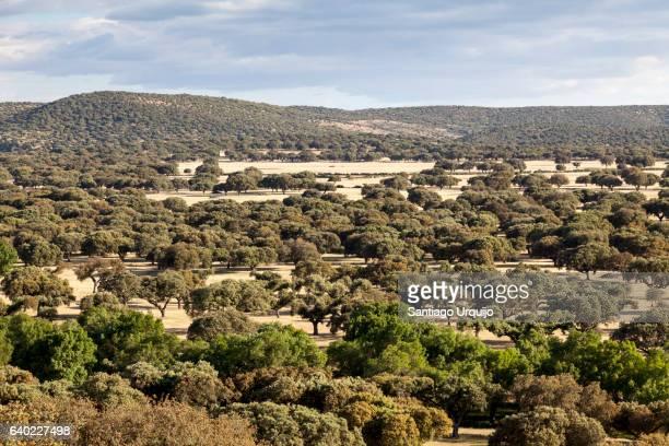 Oak tree dehesa (agro-sylvo-pastoral system)