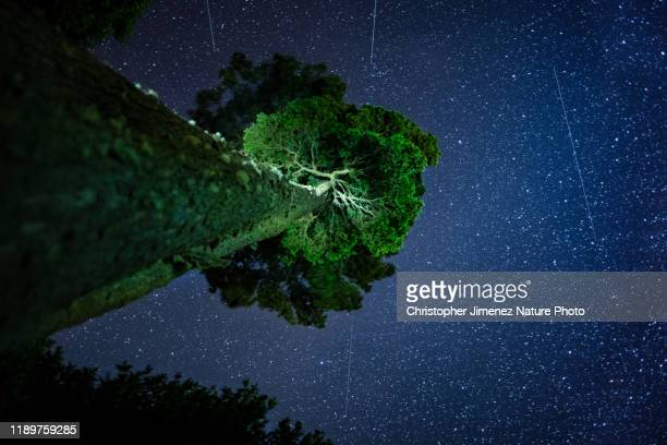 oak tree in the highlands of costa rica during the night with the stars - christopher jimenez nature photo stock pictures, royalty-free photos & images
