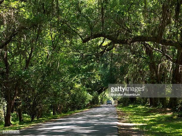Oak Tree lined street in Charleston, South Carolina