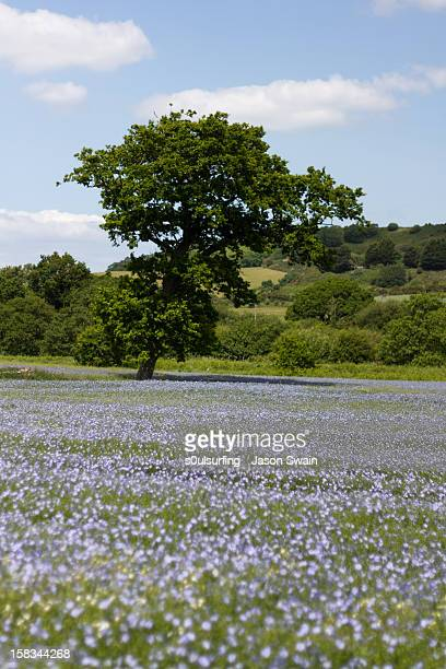 oak tree - s0ulsurfing stock pictures, royalty-free photos & images