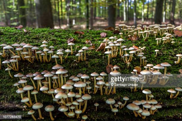 oak tree trunk covered with moss and mushrooms - fungus stock pictures, royalty-free photos & images