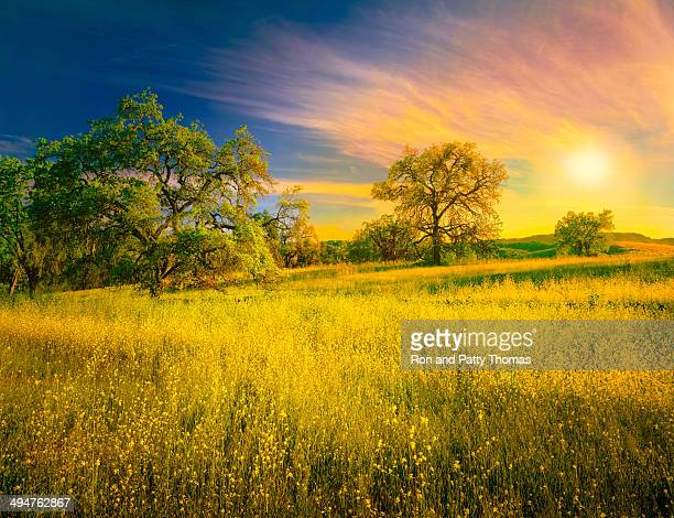 Árvores de carvalho e mostarda plantas