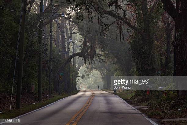oak trees canopy a road in tallahassee - tallahassee stock pictures, royalty-free photos & images