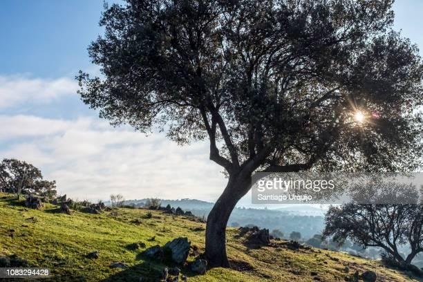 Oak woodland and pastures