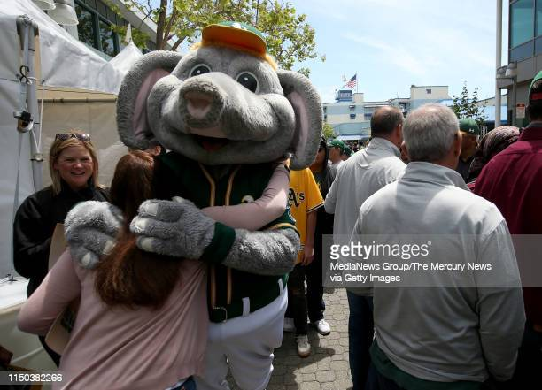 Oakland Athletics mascot Stomper hugs A's fan Tracey Hardesty of Benicia who works in Oakland at a rally in Jack London Square near the Port of...