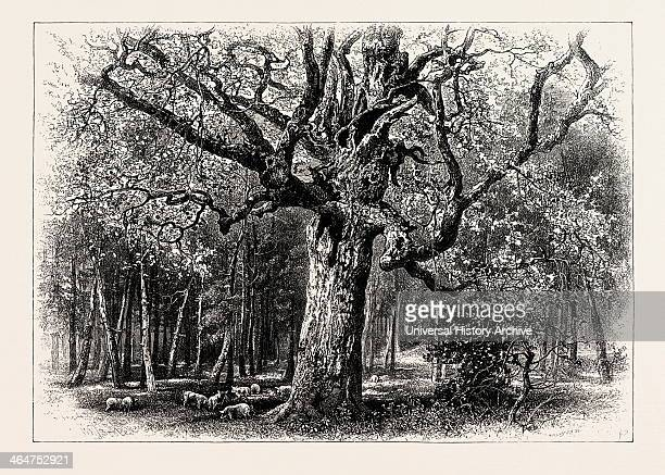 Oaks At Nid D'aigle Forest Of Fontainebleau France 19th Century Engraving