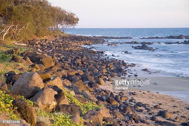 Oaks Beach volcanic basalt rock Burnett Heads Woongarra Marine Park Queensland Australia