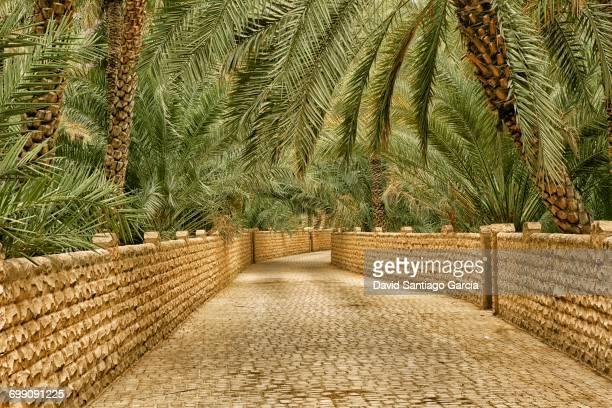 oasis, al ain, abu dhabi, united arab emirates, middle east - アブダビ アルアイン市 ストックフォトと画像