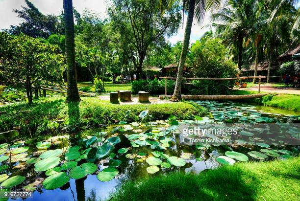 oasis in the mekong delta in vietnam - can tho province stock pictures, royalty-free photos & images