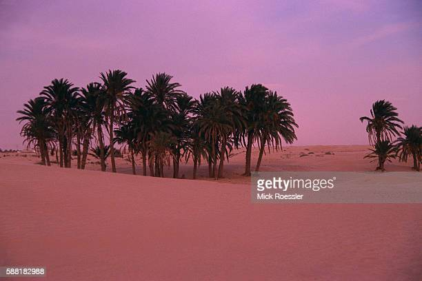 Oasis of Palm Trees in Desert